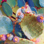The Queen's Cactus, by Todd Friedlander
